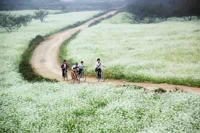 Du lịch Mộc Châu - mùa hoa cải