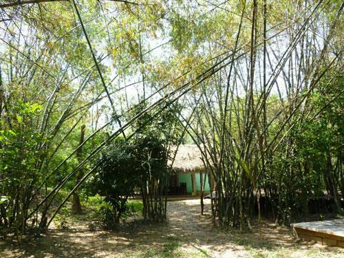 Tận hưởng hương đồng gió nội ở làng Triêm Tây – xứ sở bình yên của xứ Quảng