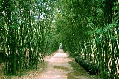 Du lịch Sài Gòn - làng tre Phú An