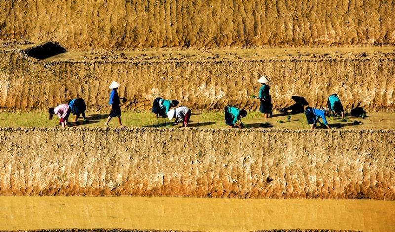 Ruộng bậc thang là nơi canh tác của đồng bào dân tộc ở Hoàng Su Phì