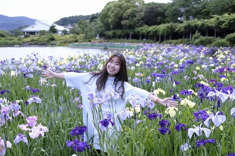 Đẹp nao lòng mùa hoa diên vĩ ở Nhật Bản