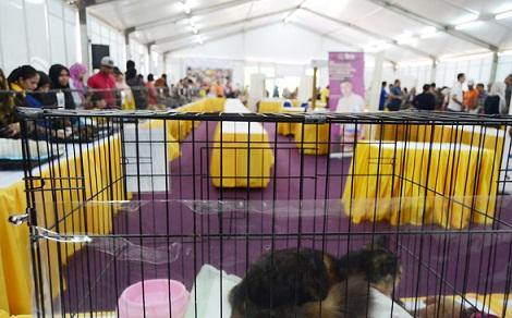 Lễ hội mèo ở Malaysia
