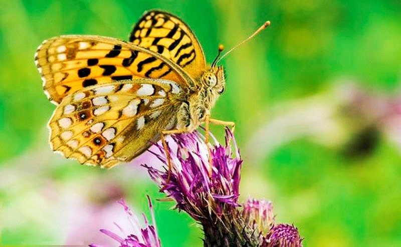 Những chú bướm khoe sắc trong vườn bướm Grevenmacher