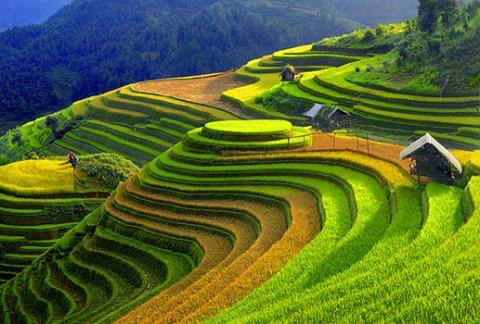 http://www.dulichvietnam.com.vn/dep-say-long-mu-cang-chai-chom-thu.html