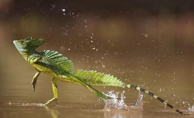 Kinh ngạc trước những bí ẩn trong rừng Amazon