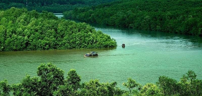 Rừng ngập mặn Cà Mau có diện tích lớn chỉ sau Amazon