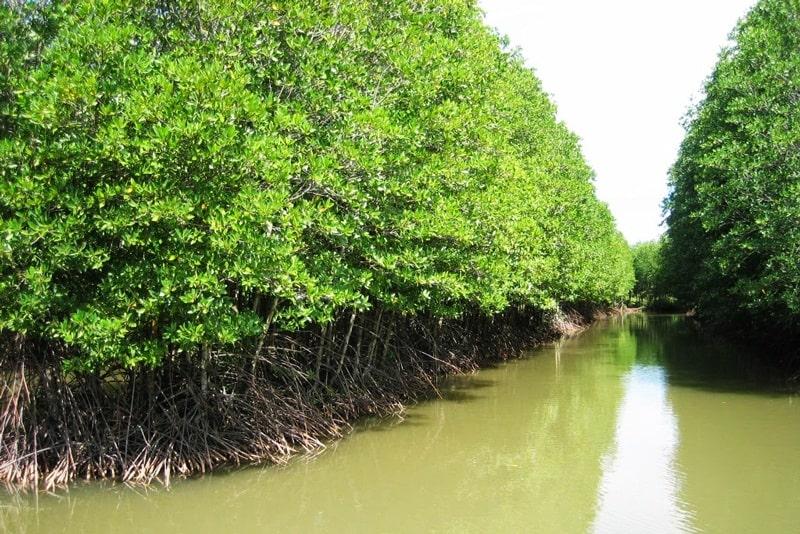 Điều gì làm rừng ngập mặn Cà Mau thu hút đến thế?