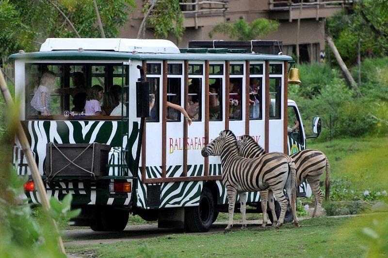 Du khách có thể tiếp cận các loài vật ở công viên Taman Safari