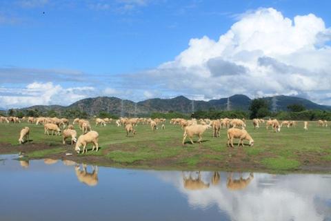 Đồng cừu An Hòa, Ninh Thuận.