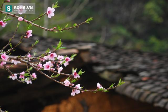 Nếu thấy cuộc sống nặng nề quá, hãy đi về phía mùa hoa tháng 3