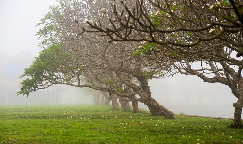 Xứ Huế huyền ảo, mộng mơ trong sương mờ
