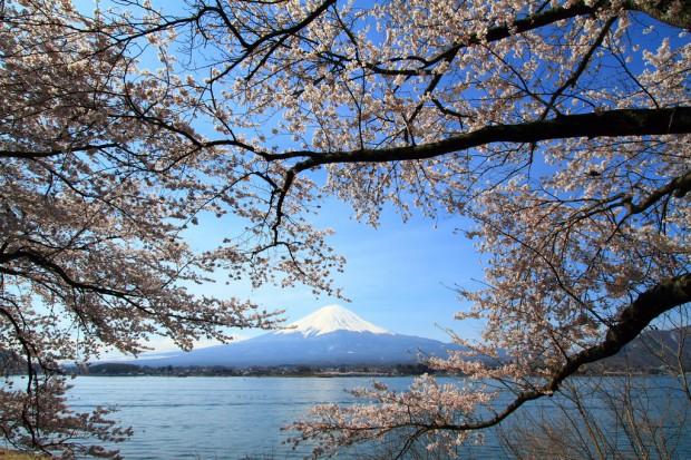 Hoa anh đào và núi Phú Sĩ là 2 biểu tượng nổi tiếng của Nhật Bản
