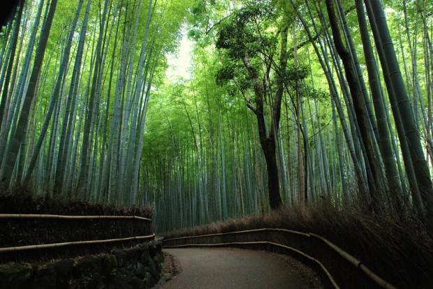 Đi bộ thư giãn giữa rừng trúc thanh bình