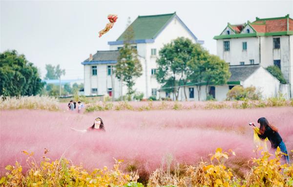 Cánh đồng màu hồng đẹp khó tin hấp dẫn giới trẻ Trung Quốc