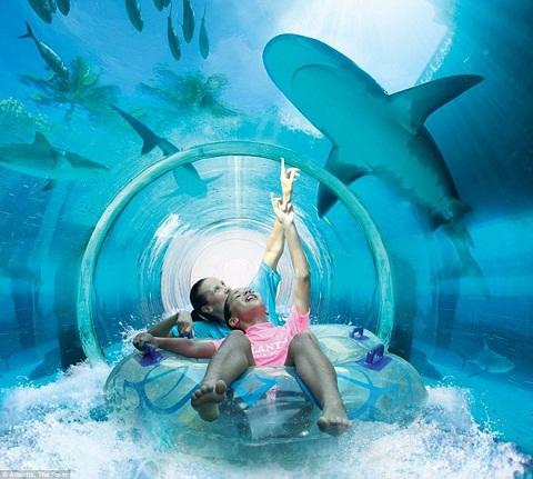Du lịch và ngắm cá mập, bạn có muốn thử?