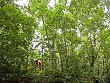 Khách sạn Canopy Rainforest Treehouses, Úc