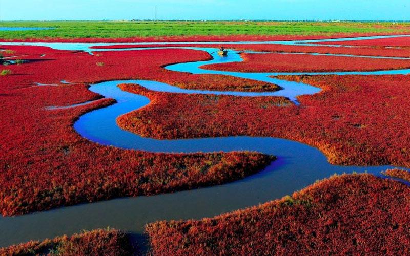 """Vẻ đẹp đáng kinh ngạc của """"bãi biển Đỏ"""" Trung Quốc"""