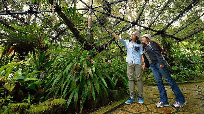 Vườn bách thảo Kinabalu Park