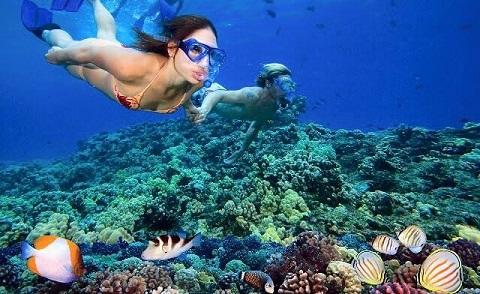 Trải nghiệm lặn ngắm san hô