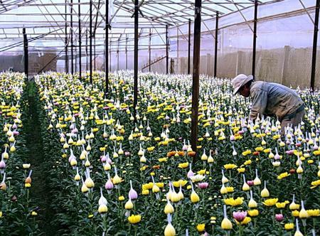 Làng hoa Hà Đông