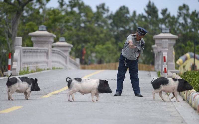 """Ghé thăm """"Hành tinh lợn"""" có một không hai dịp đầu năm"""