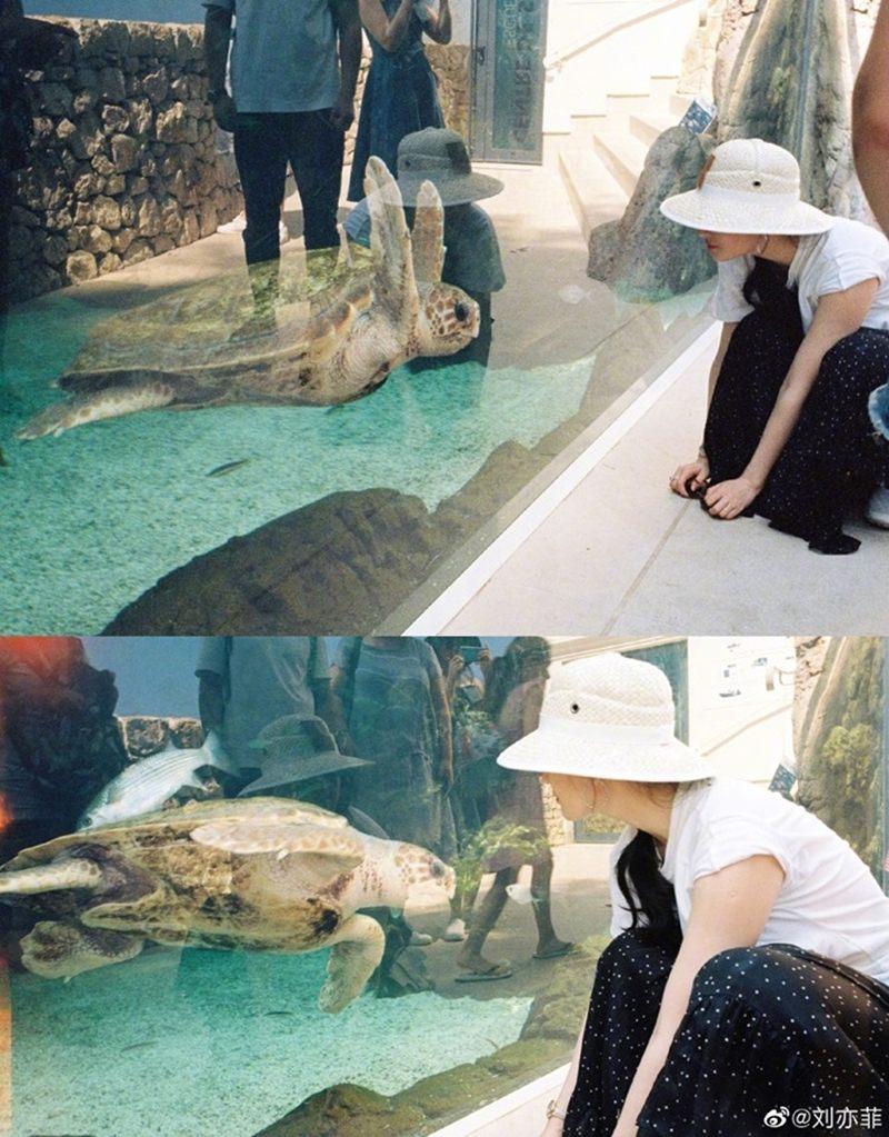Thoải mái ngắm nhìn những chú rùa