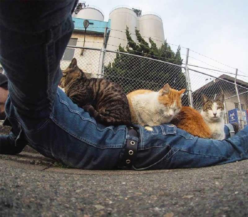 mèo hoang Nhật Bản