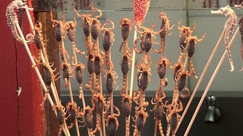 Những con bọ cạp hung hãn được chế biến thành món ăn bổ dưỡng