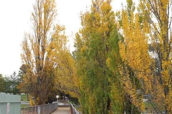Mùa thu nước Úc7