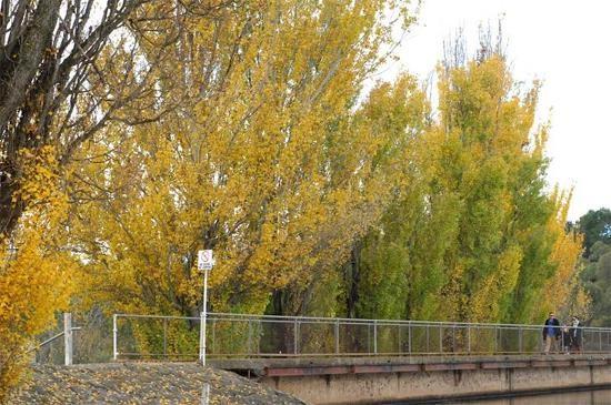 Mùa thu nước Úc9