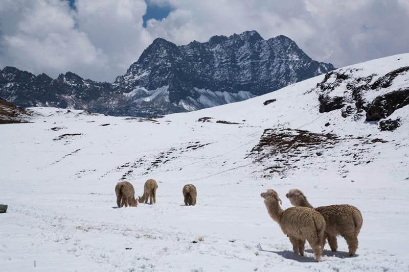 Ngọn núi cầu vồng đẹp như tranh vẽ ở Peru
