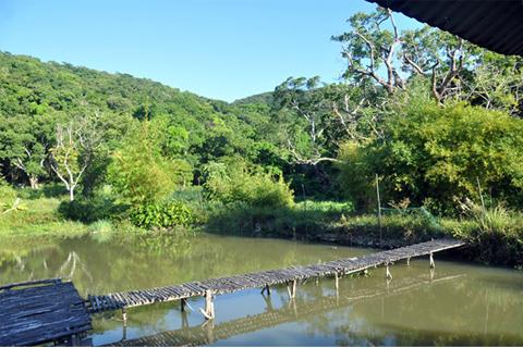 Suối Nai bao bọc lấy rừng cây, mang cảm giác yên bình hiếm có
