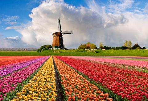 Mùa hoa tulip rực rỡ sắc màu ở Hà lan