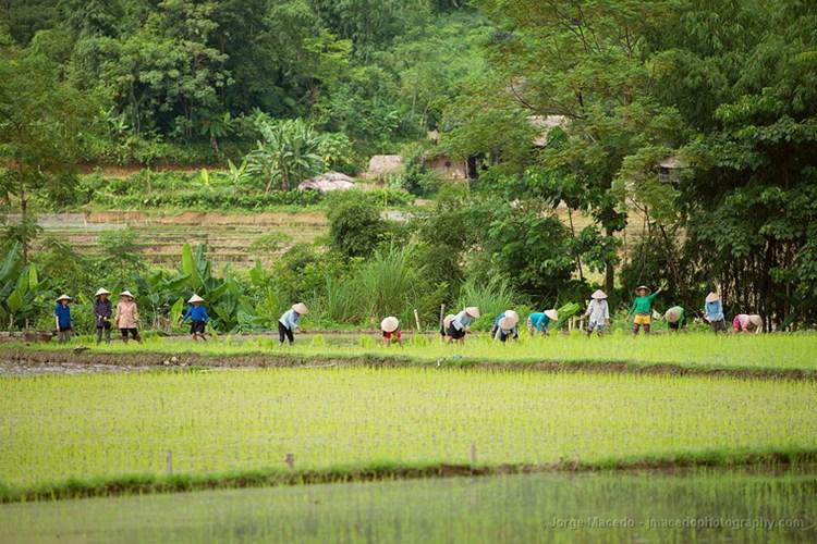 Những người nông dân trên ruộng lúa