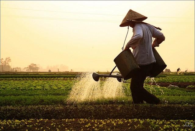 http://www.dulichvietnam.com.vn/data/quef.jpg
