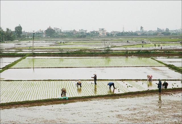 http://www.dulichvietnam.com.vn/data/queh.jpg