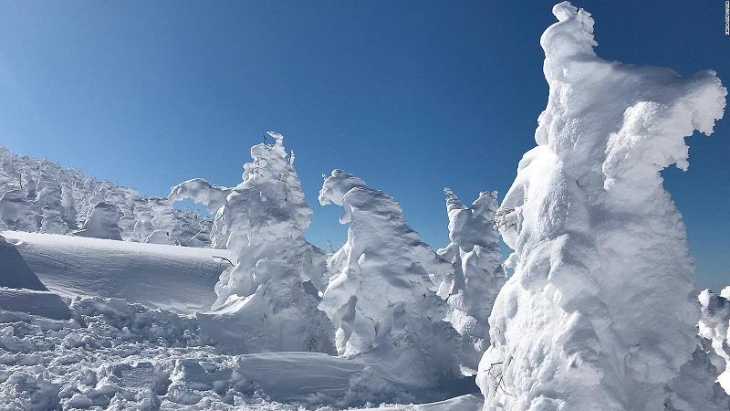 rừng quái vật tuyết