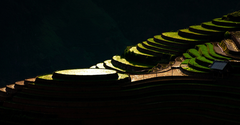 Ruộng bậc thang Mù Cang Chải mùa nước đổ qua góc máy của nghệ sỹ trẻ