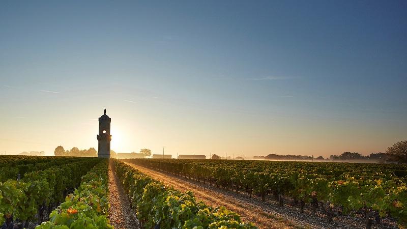 Bordeaux với hàng ngàn ha đất trồng nho