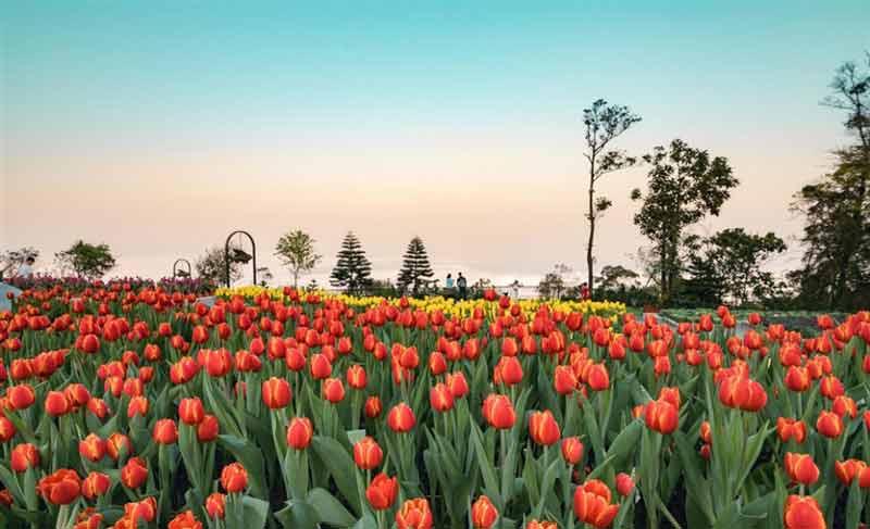 Top 6 sự kiện đặc sắc tại Đà Nẵng tháng 3/ 2019