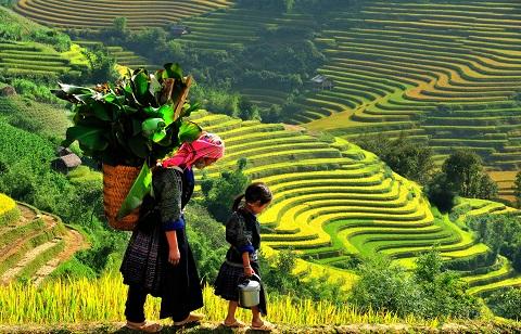 Sapa với cánh đồng lúa đẹp ngất ngây