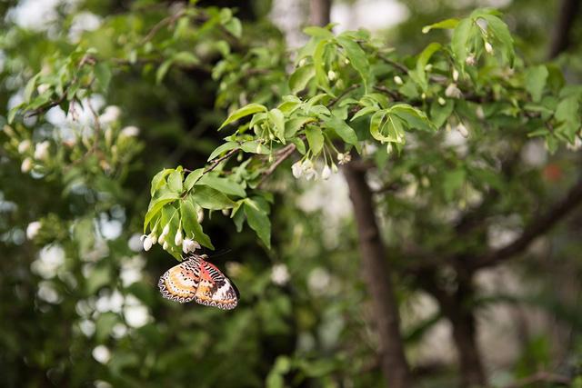 Sân bay  Changi sở hữu khu vườn tràn ngập bướm ở nhà ga số 3