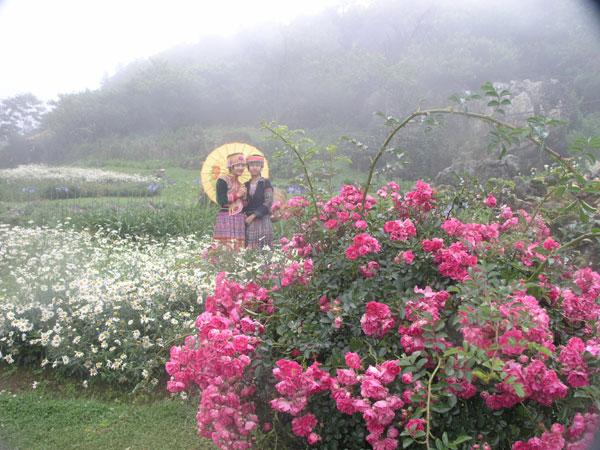 http://www.dulichvietnam.com.vn/data/sapa(13).jpg
