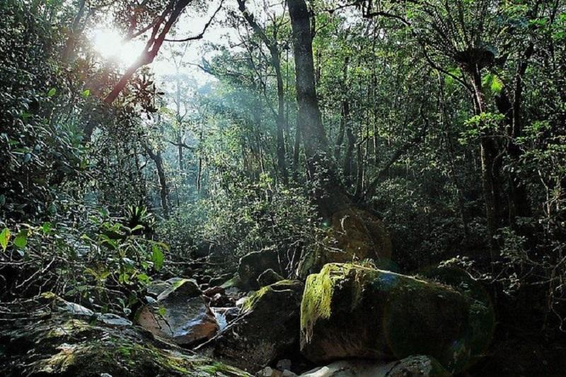 Con đường chinh phục dãy núi Chư Yang Sin