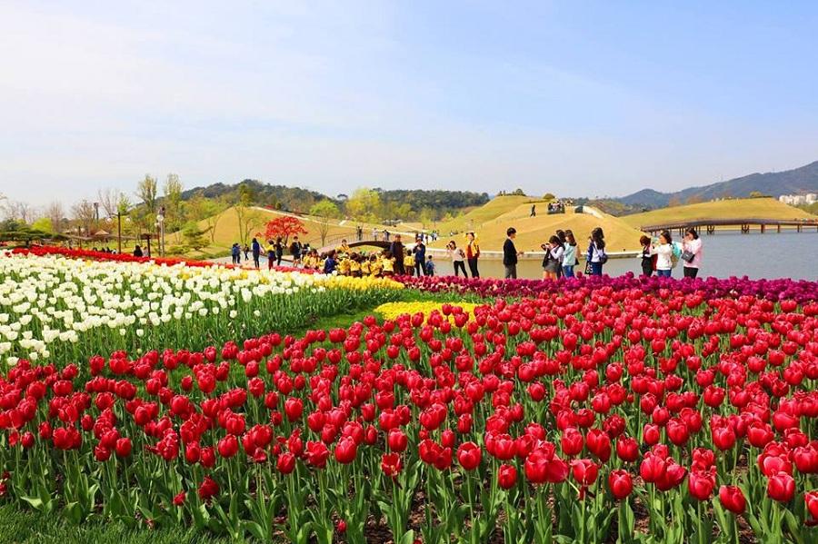Khu vườn Vịnh Suncheon – nơi tuyệt vời để tận hưởng bầu không khí trong lành