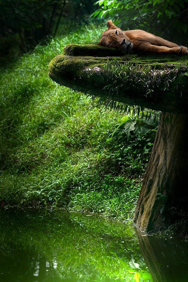 Bộ ảnh thiên nhiên tươi đẹp