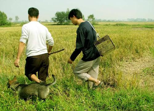 Về Đình Bảng Bắc Ninh ăn đặc sản thịt chuột