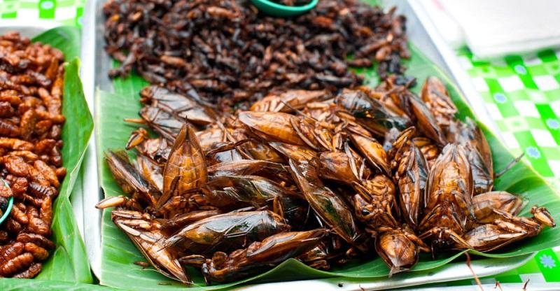 ăn côn trùng ở Thái Lan