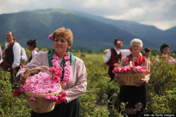 Mê mẩn thung lũng hoa hồng ở Bulgaria