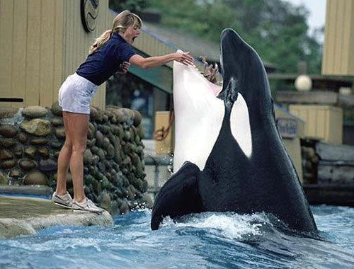 thuy cung seaworld